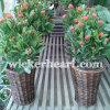 도매 OEM Handmade 길쌈된 포도 수확 고리 버들 세공 버드나무 등나무 화분 재배자 Ga0002