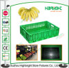 Profilatura in su Collapsible Plastic Crate per Fruits e Vegetables