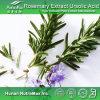 100%Natural Rosemary Extract 2.5%~90% Rosmarinic Acid