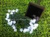 Luce solare del giardino del LED (contenitore di regalo G12)