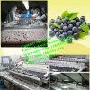 Uva-do-monte automática da máquina de classificação da uva-do-monte que classific pesando a linha de embalagem