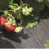 tissu tissé par polypropylène noir de lutte contre les mauvaises herbes de 100g Pour la fraise