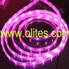 (CE&RoHS) luce della corda di 12V/24V 3528 SMD LED, corda del neon del LED