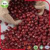 Rote Mungobohnen Adzuki rote Bohnen