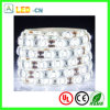 Luz de tira blanca fresca de Wateproof IP65 LED 5630 SMD