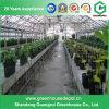 Tabella dei sistemi di coltura idroponica della serra da vendere