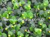 Трава стены Decrative искусственная для крытого и напольного украшения (SUNW-MZ00033)