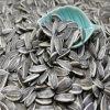 Les graines de tournesol 5009, 363 (20/64 22/64 24/64)