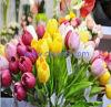 性質の接触PUの人工的なチューリップの花