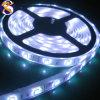 Bianco freddo della striscia di SMD 5050 60LED/M LED