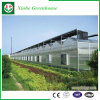Van de Spanwijdte van de landbouw de MultiSerres van het PC- Blad voor Installaties
