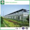 Парники листа PC пяди земледелия Multi для заводов