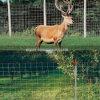 Cerca de los ciervos y de la fauna
