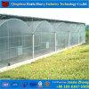 トマトの温室の低価格のプラスチック温室