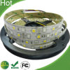 SMD5050 24V RGBW Flexible DEL Strip 24V RGBW DEL Strip Light