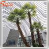 Décoration intérieure de fibre de verre artificielle Palm Tree