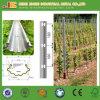 150g heißer eingetauchter galvanisierter Pole für Weinberg, Trauben-Stange