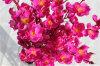 Fiore di seta della pesca dei fiori artificiali per la decorazione di cerimonia nuziale