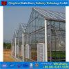 Estufa de vidro da Multi-Extensão quente da venda para a plantação do vegetal e da flor