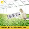 La MAZORCA LED del poder más elevado crece luces que 800W LED crecen la luz