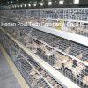 Система клетки цыпленока