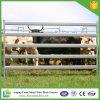 Panneau portatif lourd galvanisé de bétail d'IMMERSION chaude pour l'Australie