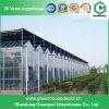 Professionelles hochwertiges industrielles Wasserkultursystems-Gewächshaus