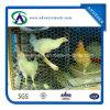1 '' Caldo-Si è tuffato rete metallica galvanizzata & elettrotipia galvanizzata del pollame & rete metallica del pollo del collegare di pollo