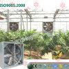 An der Wand befestigter Absaugventilator für Blume Gewächshaus pflanzend