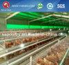 Equipo de la granja avícola del pollo en Dubai