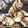 Zoolの動物保護の六角形の金網