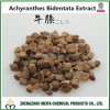Het natuurlijke Uittreksel Tegen hoge bloeddruk van de Installatie van Achyranthes Bidentata van het Poeder met Achyranthan