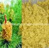 O PBF, extrato quebrado orgânico do pólen do pinho das paredes 100%Natural, pó Escudo-Quebrado do pólen do pinho, anticanceroso, antienvelhecimento, prolonga a vida, alimento natural