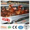 Galvanzied 유형 보일러 건전지 감금소 닭 농장 가금