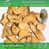 Het Natuurlijke Rhizoma Polygoni Cuspidati Uittreksel van 100% (5%~ 98% Resveratrol, 4:1 ~20: 1)