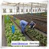 Парник листа PC высокого качества фабрики Китая для томата