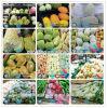 도매 파파야 거품 방어적인 과일 그물
