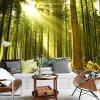 Stampa Premium della carta da parati dell'isolamento facile naturale di alta risoluzione di paesaggio