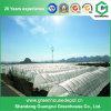 Mit hohem Ausschuss grünes Haus-Plastikfilm-Gewächshaus für das Pflanzen