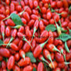 Polen natural de la fruta del 100% Barbary Wolfberry, comida sana