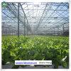 중국에 있는 갱도 알루미늄 햇빛 유리제 온실