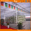 Policarbonato Sheet Green House per Planting Vegetables