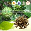 Raiz medicinal de Indianmulberry Indianmulberry da medicina natural da erva