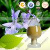 Natuurlijke Rosemary Extract 70% Carnosic Zure CAS 3650-9-7