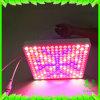 LED는 1PCS 50W 일정한 현재 전력 공급에서 건축된 실내 플랜트 위원회 225PCS 2835 LED를 위한 가벼운 플랜트 램프를 증가한다