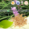 Raiz Ophiopogonis Ophiopogon da medicina da erva Japonicus