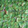 인공적인 녹색 담 회양목 산울타리