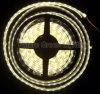LED 지구