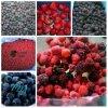 Nueva IQF Crop Congelado bayas mezcladas en Alta Calidad