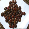 Красная естественная плитка камня камушка